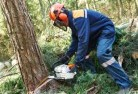 Acacia Hills Tree felling services 21